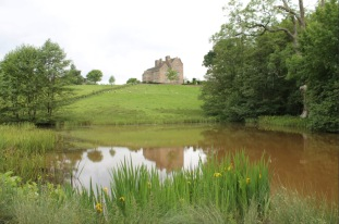 The venue. Treowen little lake contains a good head of rudd, roach and tench.